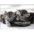 L'agenda-calendrier chats et chatons