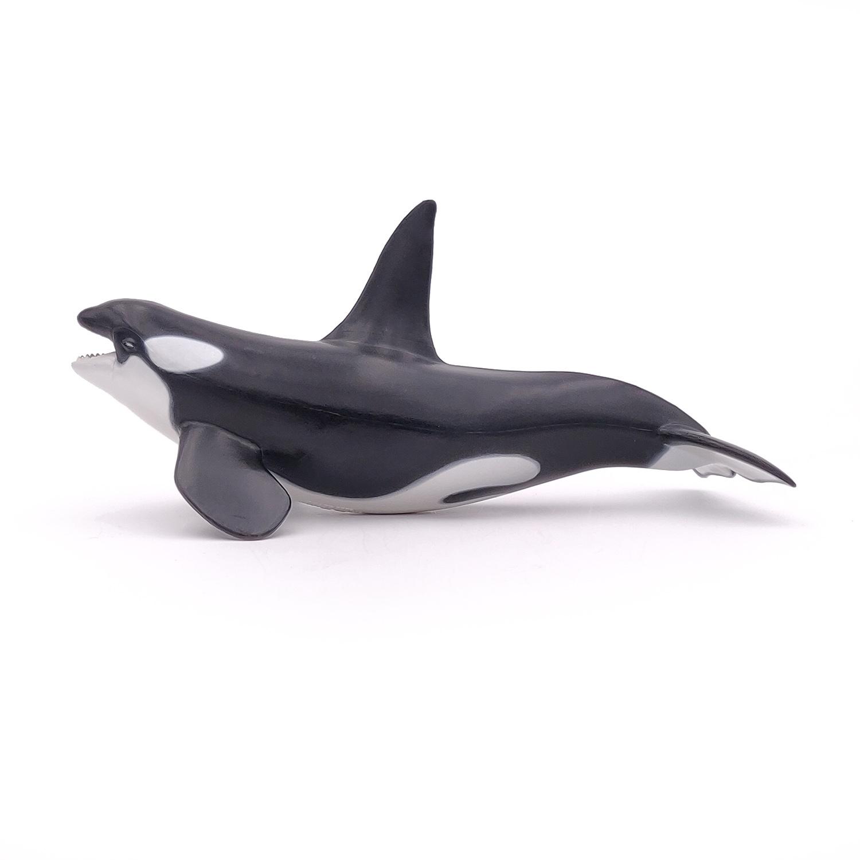 Orque - PAPO - 56000