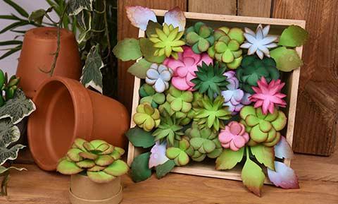 Cadre végétal succulentes