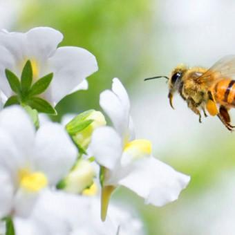 En savoir plus sur le Vivre Nature