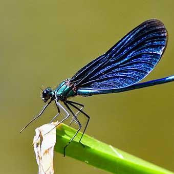 Insectes - Reptiles